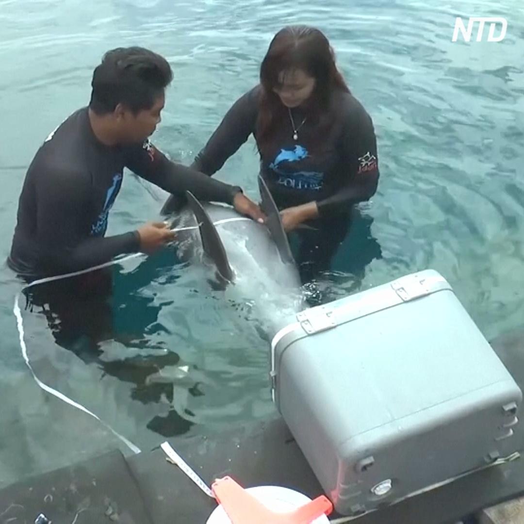 Как на Бали спасают дельфинов и отпускают их на волю