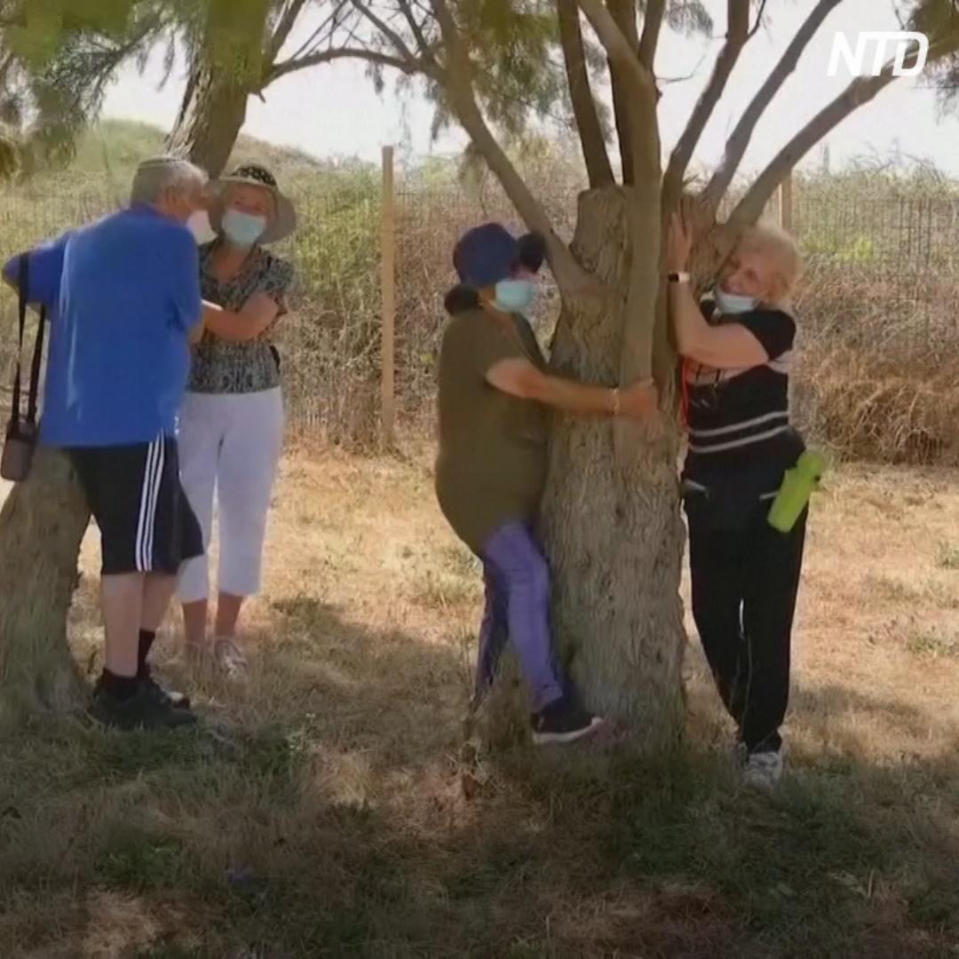 В Израиле вместо родных советуют обнимать деревья