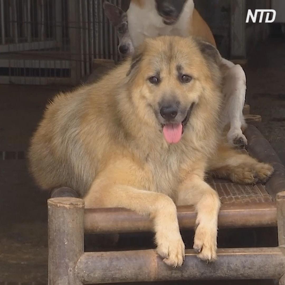Брошенные во время пандемии собаки: приют в Индонезии не справляется