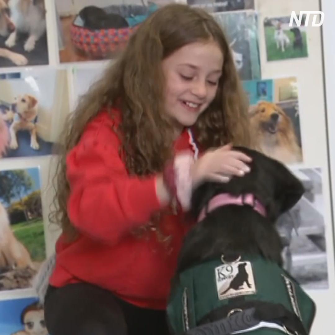 Как собаки помогают детям-сиротам адаптироваться к школе