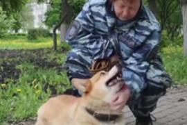 Нижегородского корги-полицейского проводили на пенсию