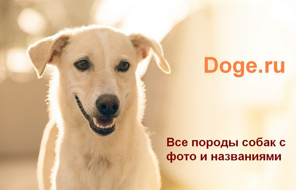 Калейдоскоп пород собак с фото и названием