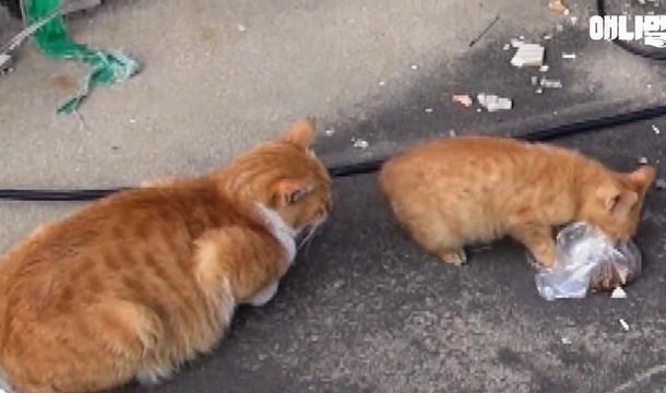 Novyj risunok 2 10 - Почему бездомная кошка брала еду только в пакете