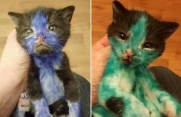Какими стали котята, когда их отмыли от маркеров