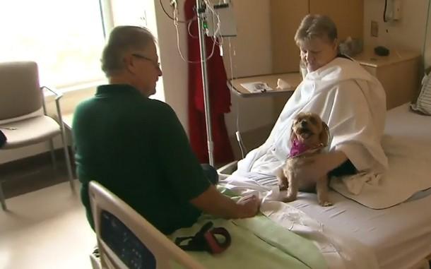 Домашние питомцы навещают хозяев в больнице