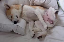 Что придумала собака, чтобы избежать визита к ветеринару. Весёлое видео