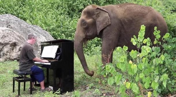 80-летняя слониха слушает игру на фортепиано