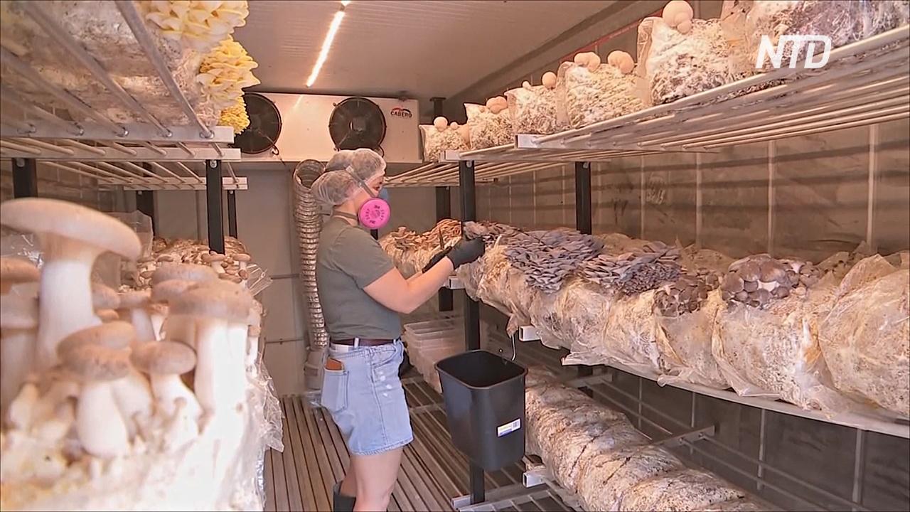 Австралийцы организовали грибную ферму в грузовых контейнерах