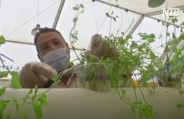 В Иордании сирийские беженцы растят овощи на старых матрасах