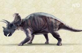 Учёные впервые нашли раковую опухоль на костях динозавра