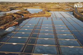 Добыча знаменитой герандской соли во Франции на подъёме из-за небывалой жары