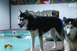 В Дубае открыли бассейн для собак, страдающих от жары