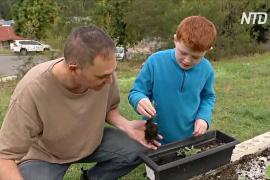 Огородники поневоле: всё больше австралийцев выращивают собственную еду