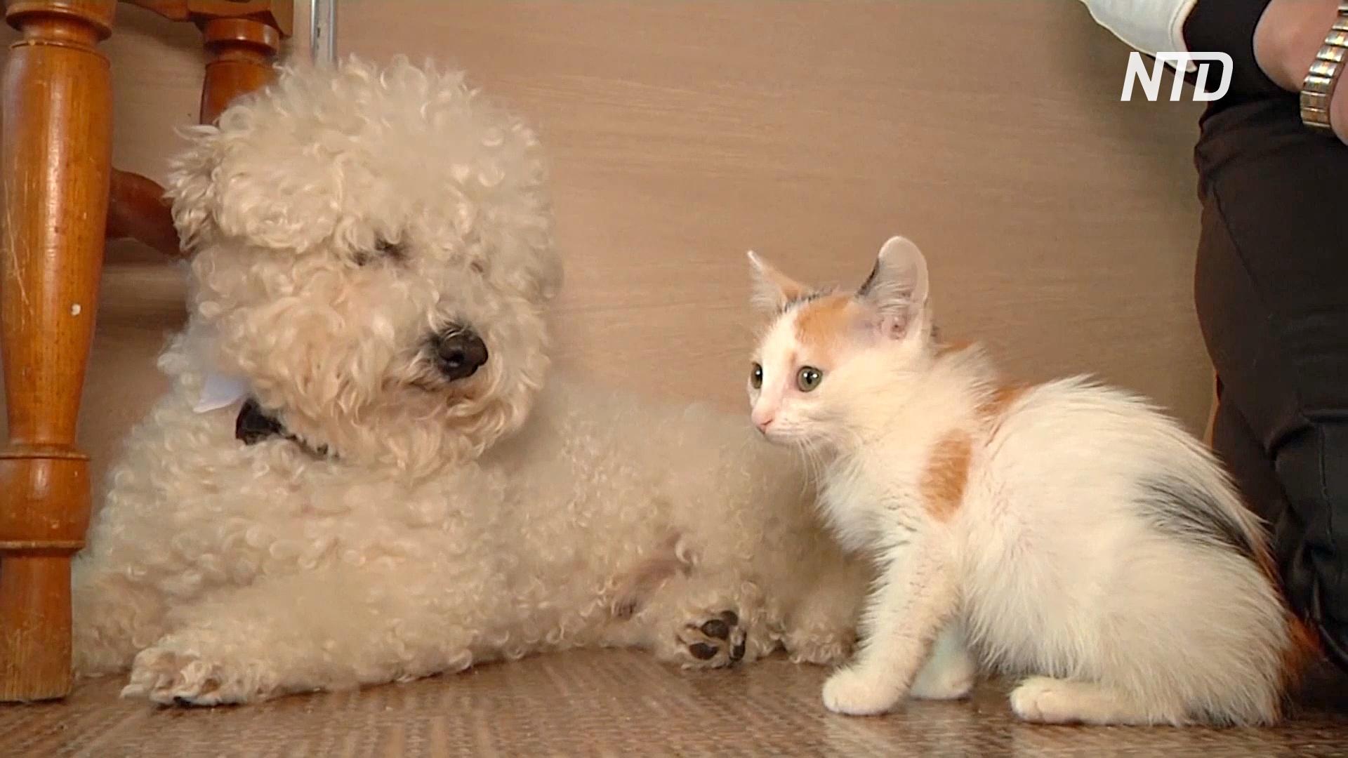 В Кемеровской области болонка ищет бездомных кошек и помогает их спасать