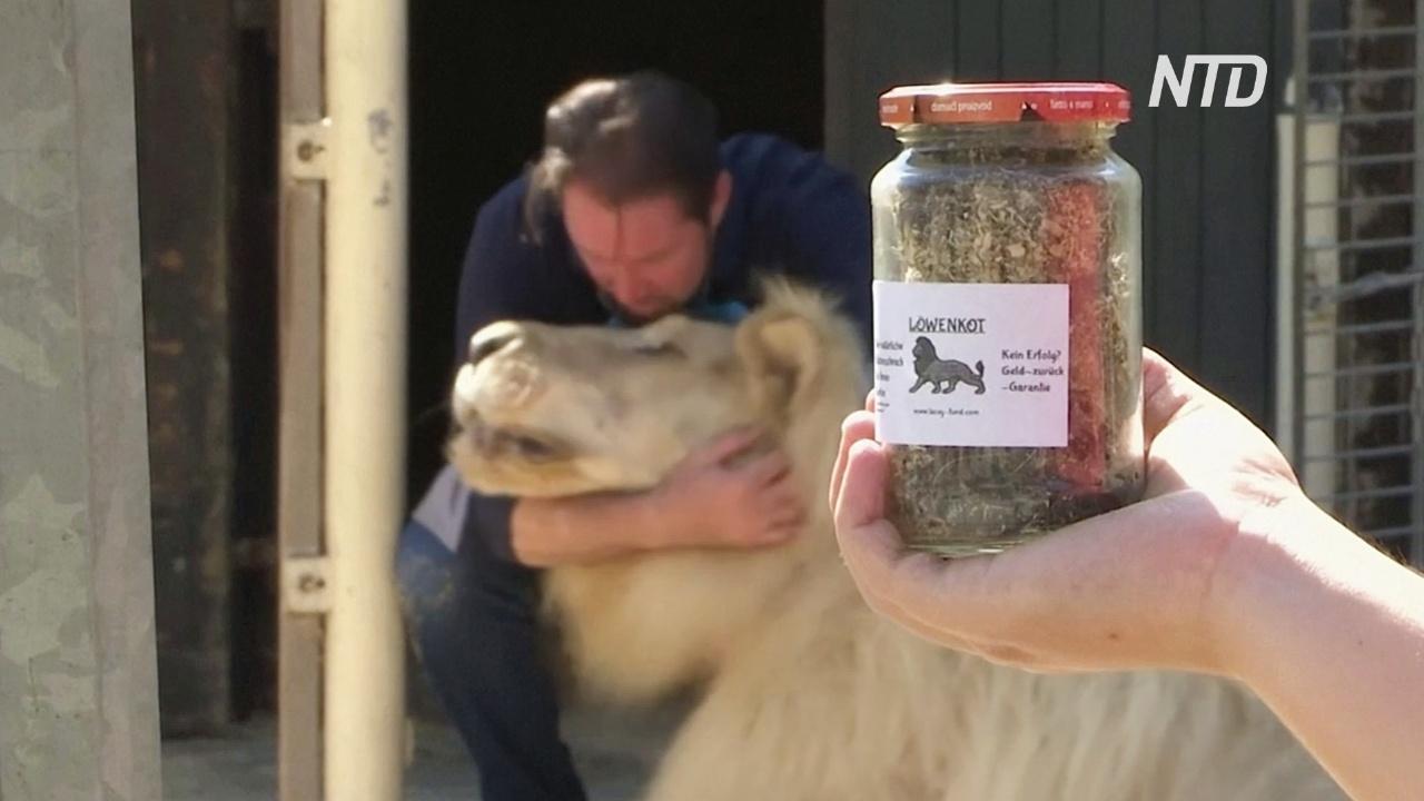 Цирк в Мюнхене продаёт львиные экскременты, чтобы поправить дела