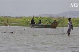 Кенийцы обвиняют Эфиопию в том, что крупнейшее пустынное озеро мира лишилось рыбы