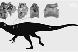 Британские учёные открыли новый вид динозавра из подотряда тероподов