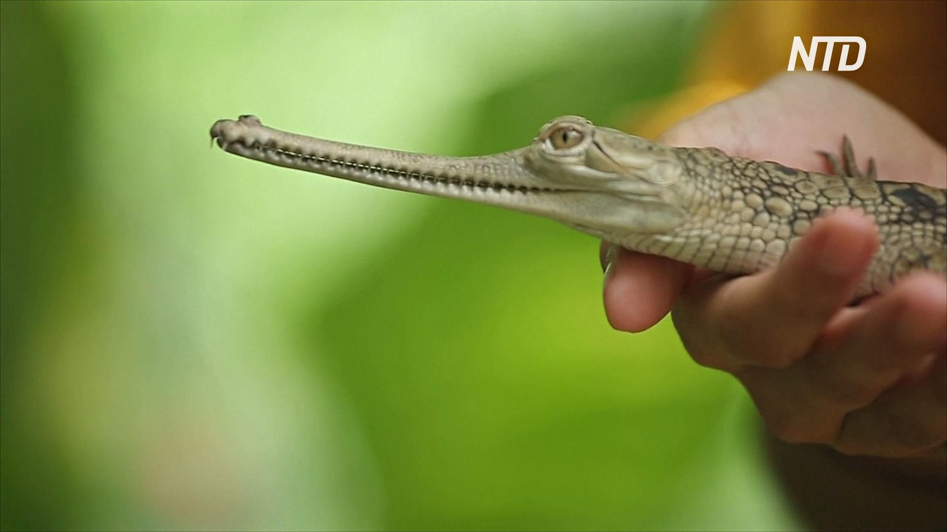 Сбор пожертвований и ролики на YouTube: как выживает парк крокодилов в Индии