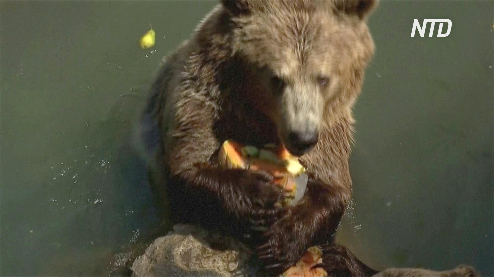 Питомцев римского зоопарка угощают холодными арбузами и ледяными фруктами
