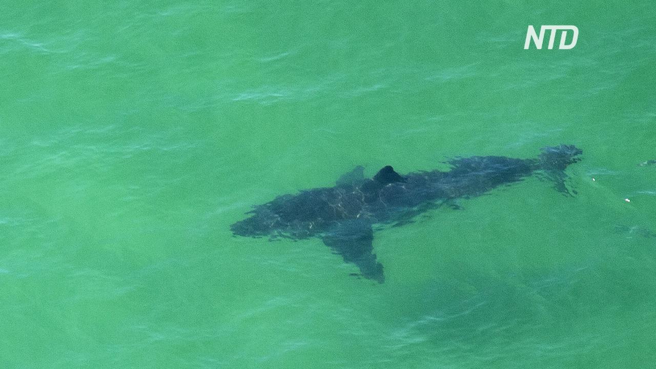 Австралиец набросился на акулу с кулаками, чтобы спасти жену
