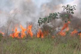 Пожары в джунглях угрожают фермерам в Бразилии