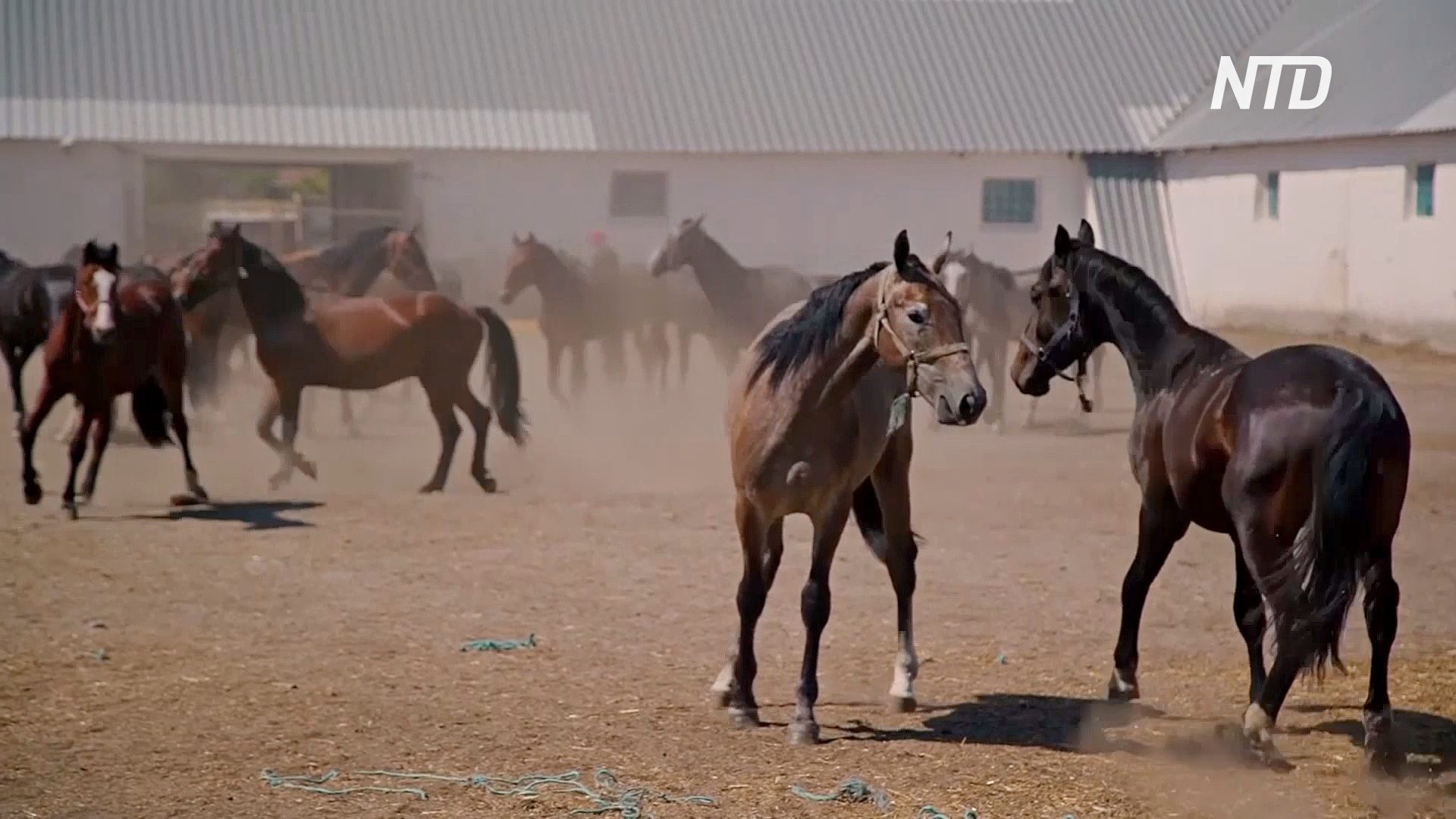 Любимых лошадей русской знати по-прежнему разводят в Воронежской области