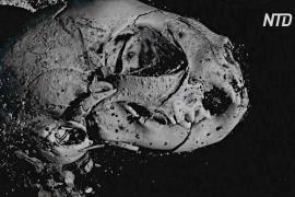 Учёные смогли заглянуть внутрь трёх мумий животных