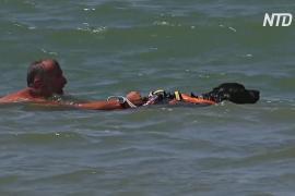 Как итальянские собаки-спасатели достают тонущих людей из воды