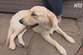 Окончание карантина вызывает стресс у домашних собак