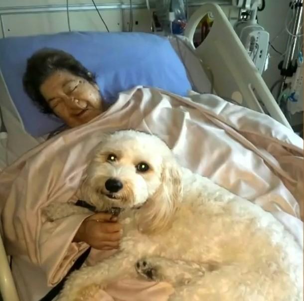 5 3 - Домашние питомцы навещают хозяев в больнице