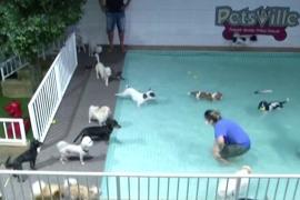 В дубайском «детском саду» для собак появился бассейн