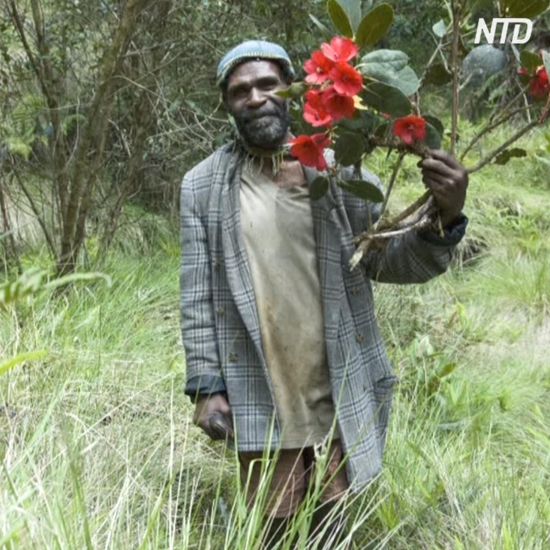На острове Новая Гвинея провели перепись флоры, результат шокировал учёных