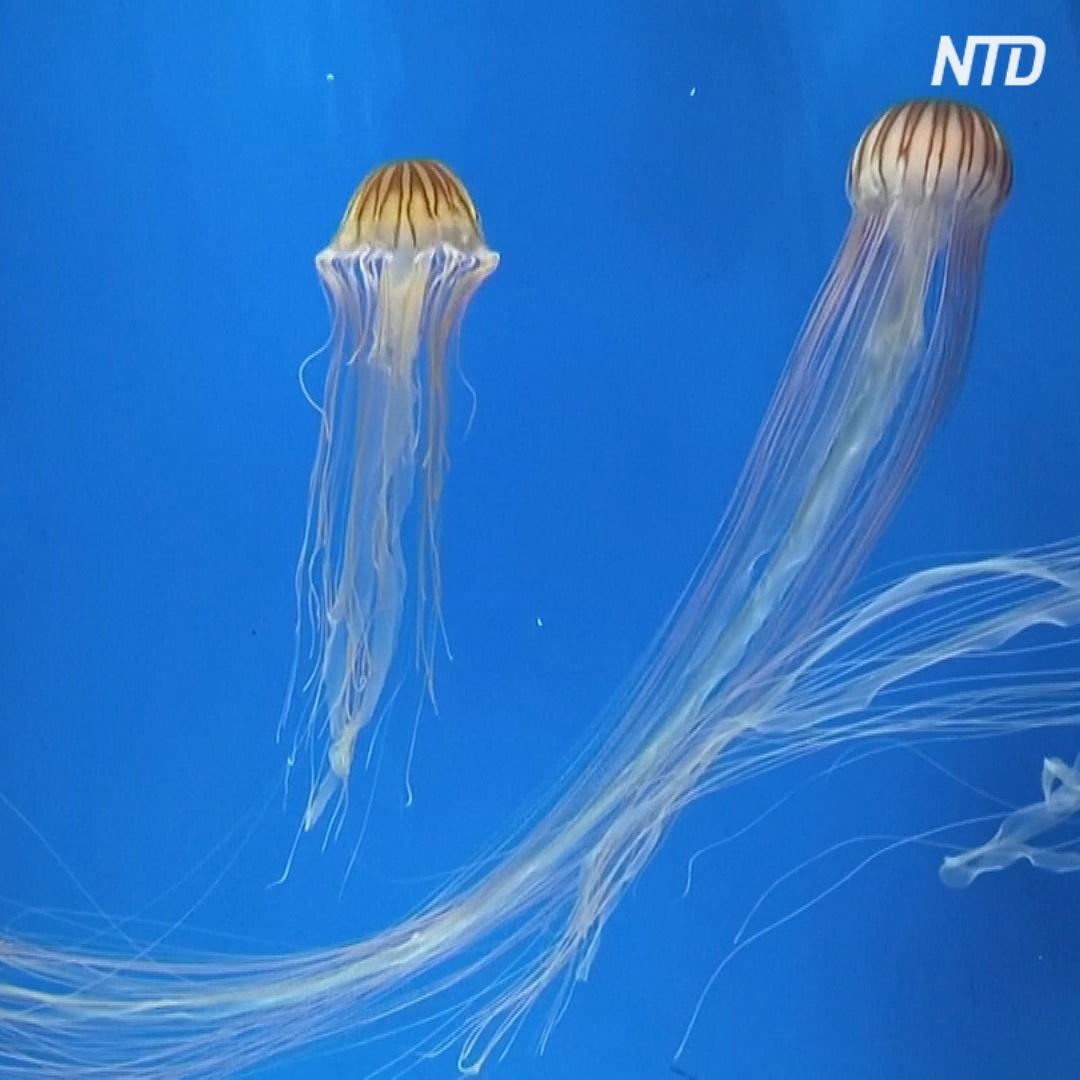 Пингвины, медузы и рыба: на Тайване открылся новый океанариум