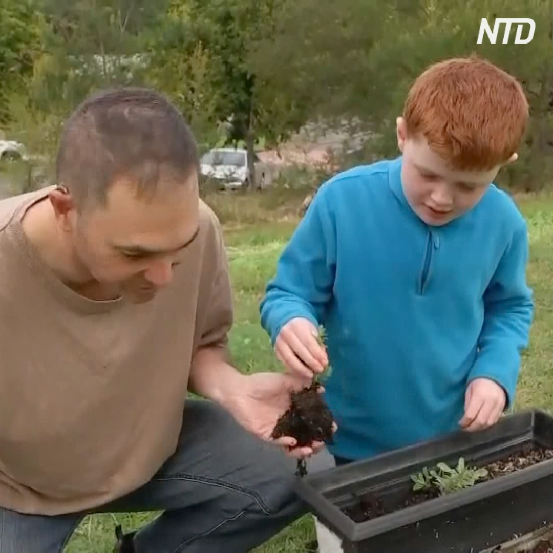 Огородники поневоле: австралийцы сидят на карантине и выращивают еду