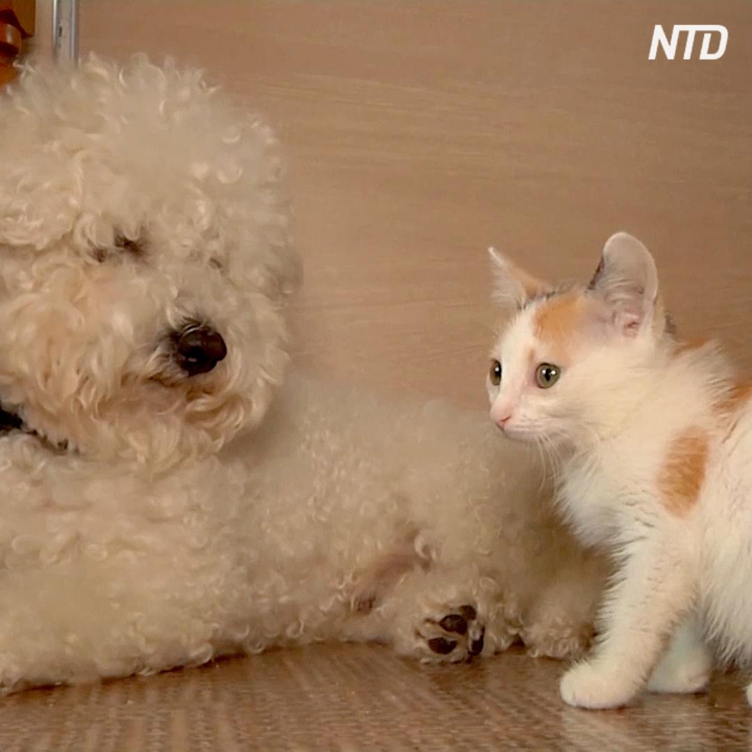 Болонка ищет бездомных кошек и помогает их спасать