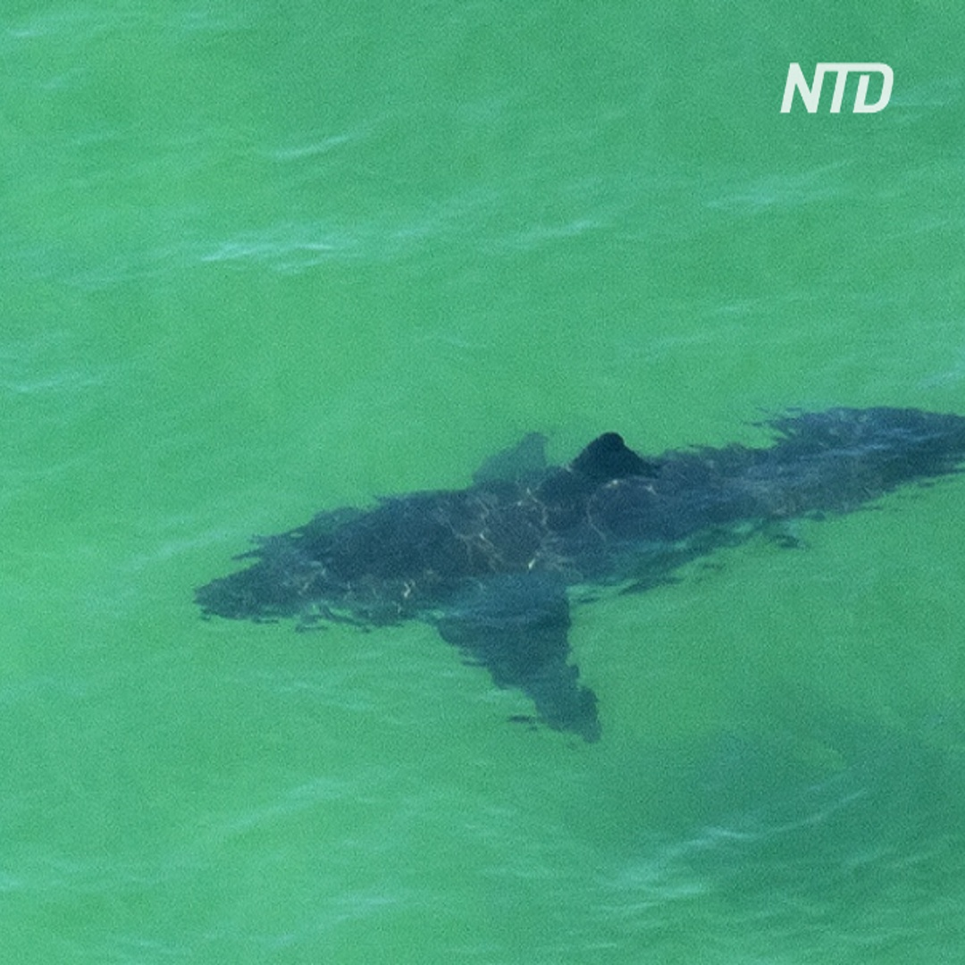 Австралиец кулаками защищал жену от акулы