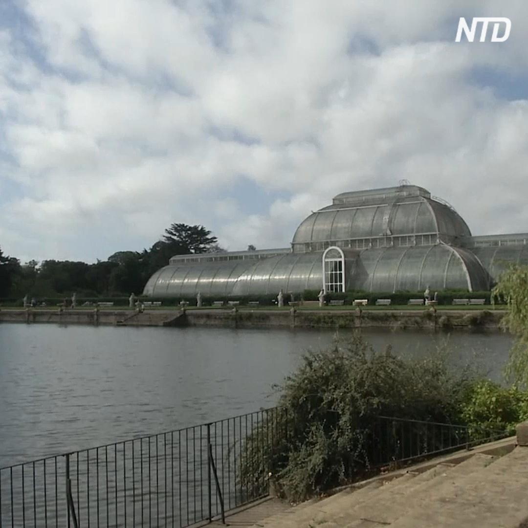 Путешествие по миру предлагают совершить в ботанических садах Лондона