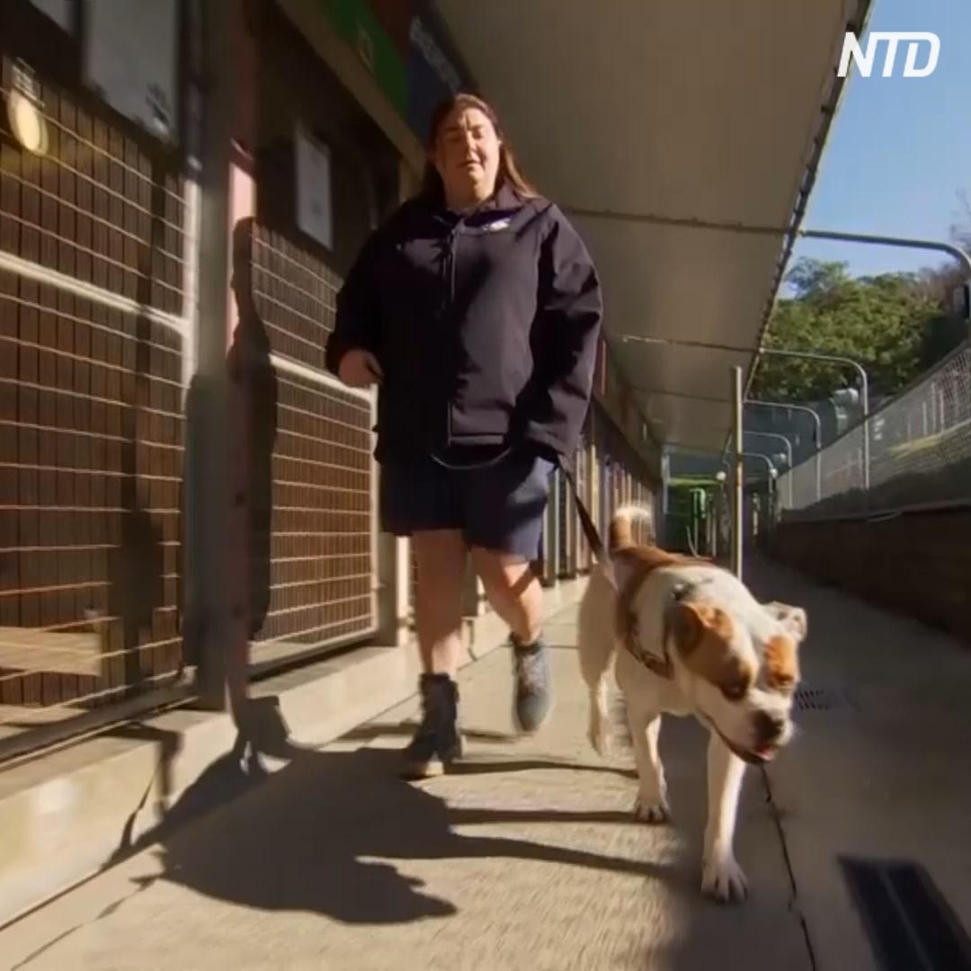 Карантин помог собакам в австралийском приюте стать спокойнее