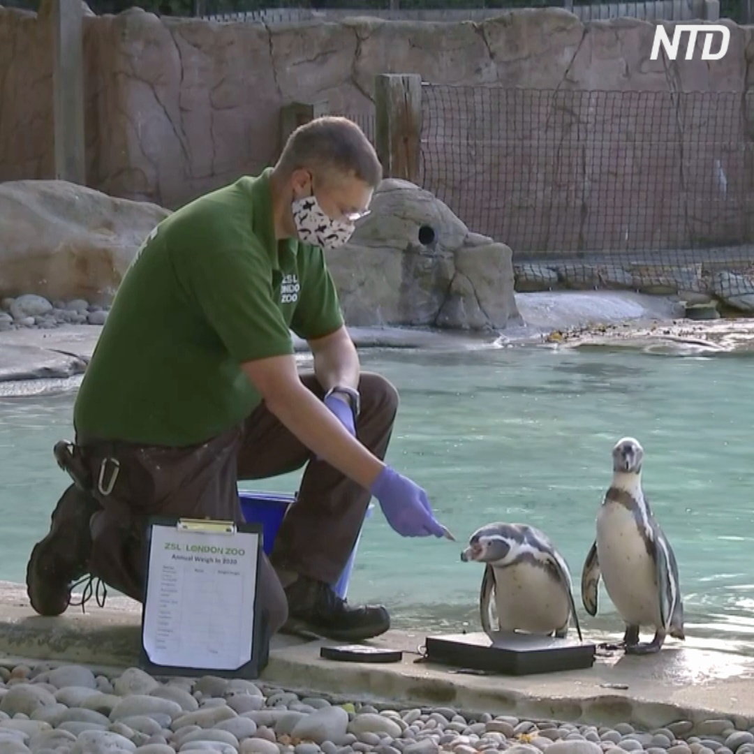 Как в зоопарке Лондона взвешивали 19 тысяч питомцев