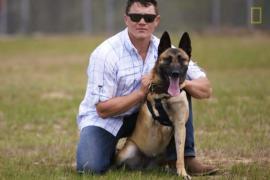 Собака-герой возвращается к мирной жизни