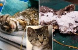 Котёнок в строительной пене выжил и обрёл семью