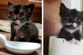 Карманный котёнок всё же вырос. Фото