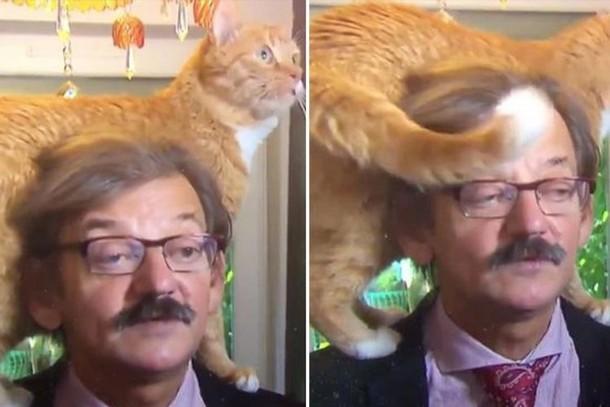 Как повёл себя кот во время интервью политолога