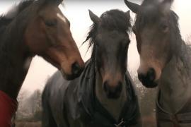 Лошади воссоединились через четыре года. Трогательное видео