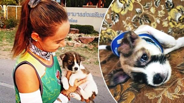 Зачем спортсменка бежала 30 км с щенком на руках