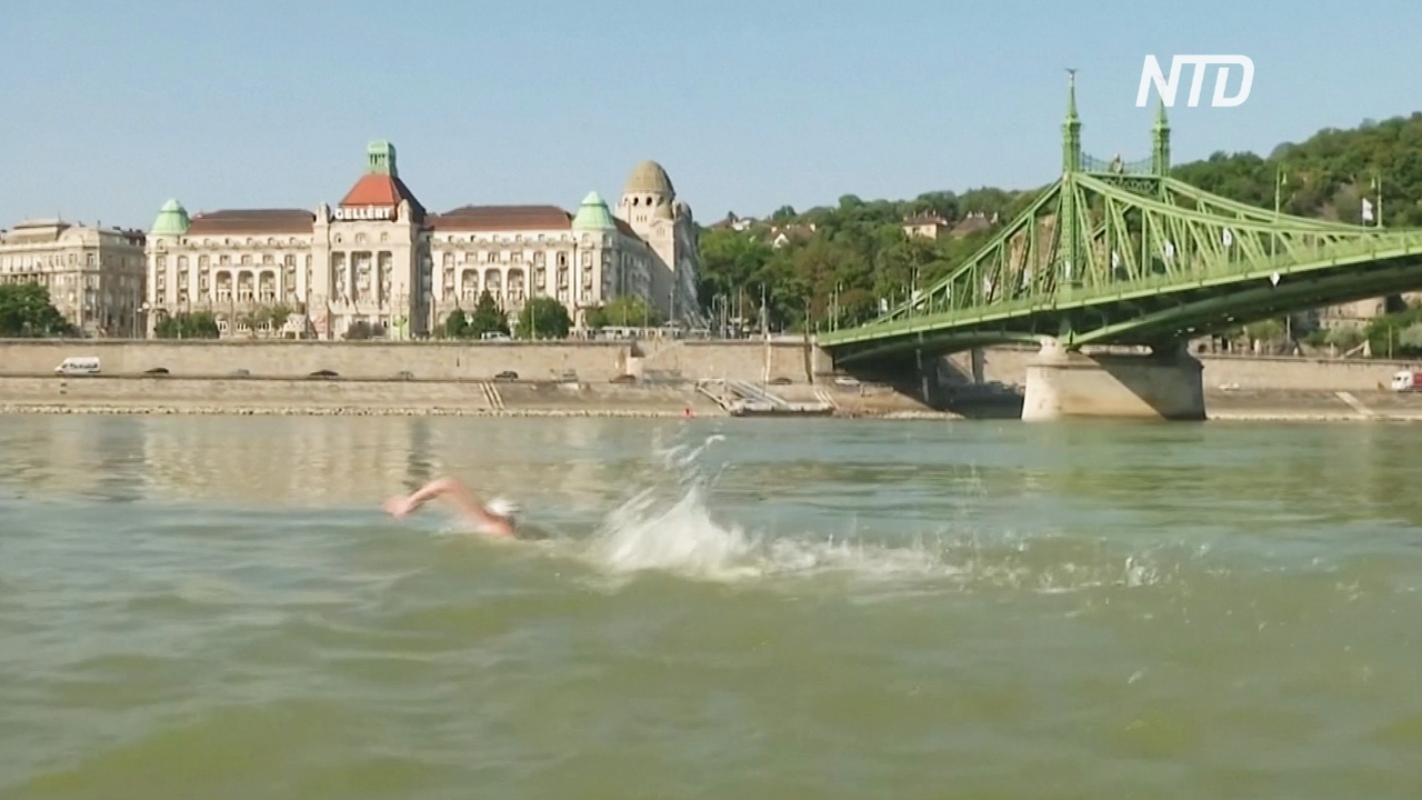 Сотни будапештцев переплыли быстрый Дунай