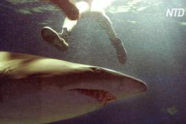 Акула напала на сёрфера в Австралии, мужчина скончался