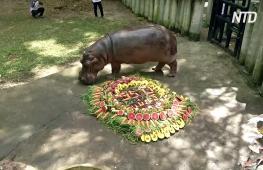 В зоопарке Таиланда отпраздновали 55-летие бегемота