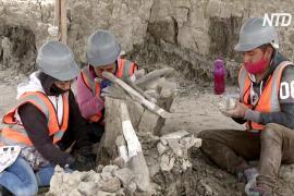 На месте будущего аэропорта в Мексике откопали 100 скелетов мамонтов
