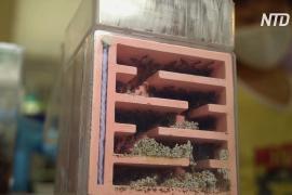 Первый в Сингапуре магазин муравьёв процветает